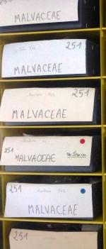 Les collections non consultables ont été intégrées aux collections déjà classées. Le classement de l'ensemble de l'Herbier a été modifié. Les millions de planches ainsi rassemblées ont été numérisées pour constituer un herbier virtuel consultable en ligne.