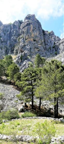 Sierra del Endrinal_Grazalema8 (2)